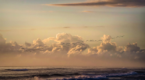Flock of Pelicans at Sunrise