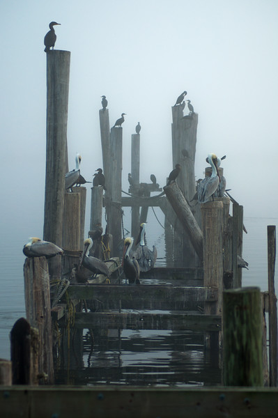 Foggy Roost