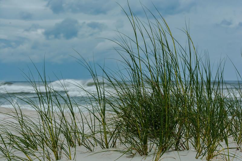 Storm surf and beach grass