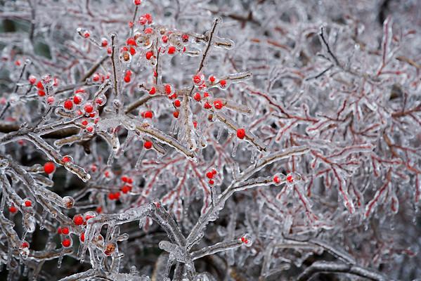 Seasons in NH
