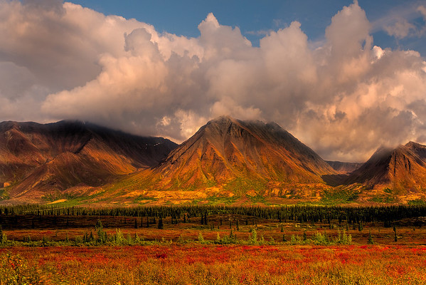 Mix Of Light And Shadow - Denali National Park, Alaska