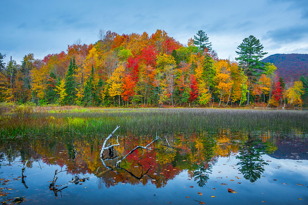The Back Area Of Lefferts Pond - Vermont