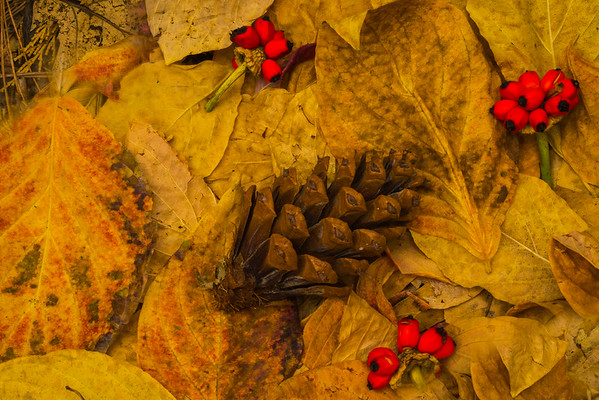 Yosemite Autumn Foliage Ground Level - Lower Yosemite Valley, Yosemite National Park, CA