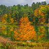 The Bright Orange Tree By The Shore - Vermont