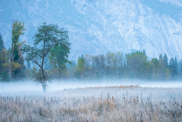 Mist Moving Along In The Meadow Morning - Lower Yosemite Valley, Yosemite National Park, CA