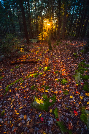 Sunburst Last Light Through Forest Trees-Ricketts Glen State Park, Pennsylvania
