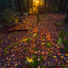 Sunburst Last Light Through Forest Trees-Ricketts Glen State Park, Pennsylvania