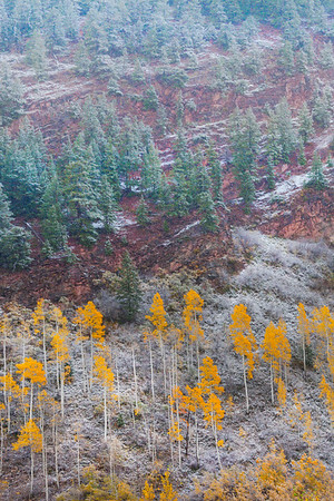 Layers Of Different Trees And Weather - Maroon Bells-Snowmass Wilderness, Aspen, Colorado