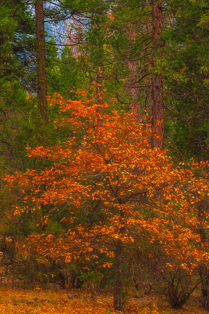 A Contrast In Colors - Lower Yosemite Valley, Yosemite National Park, CA