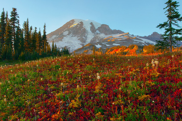 Fall Colors Bathed In Warm Light On Mazama Ridge - Mount Rainer National Park, Washington