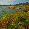 Autumn Foliage Along Shoreline Of Georgian Bay - Algonquin Provincial Park, Nipissing, South Part, Ontario, Canada