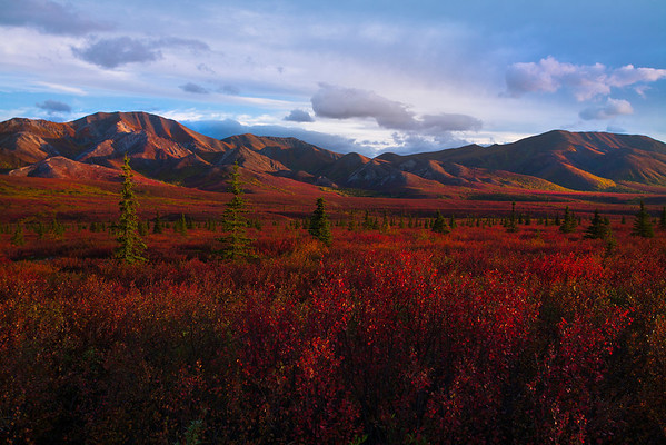 The Deep Reds Of Autumn - Denali National Park, Alaska