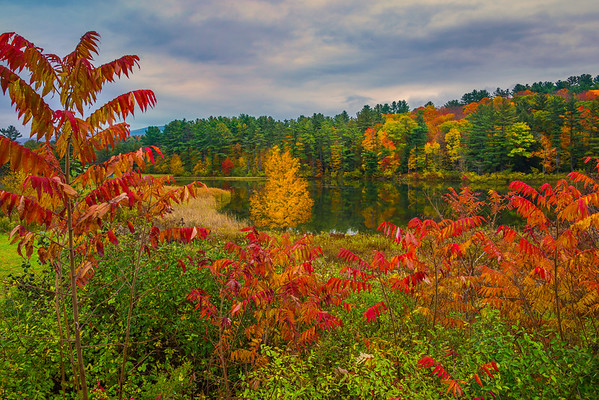 Framed In All Sorts Of Color Down At Lake - Vermont