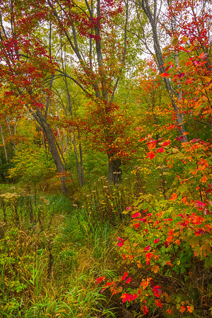 Garden of Color - Algonquin Provincial Park, Nipissing, South Part, Ontario, Canada