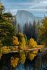 Yellow Tree Light From Sentinel Bridge - Lower Yosemite Valley, Yosemite National Park, California