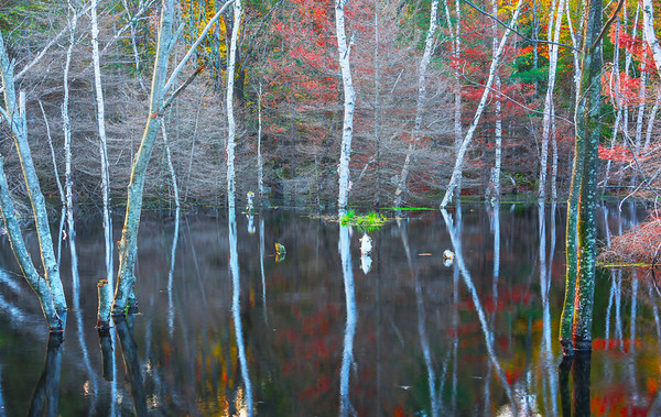 Abstract Patterns Of A Lake Dressed In Fall Color