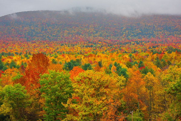 Looking Down The Whole Forest From Above - Vermont