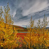 Framed In Autumn - Denali National Park, Alaska