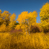 Autumn Golden Meadows - Highway 97, Near Cle Elum