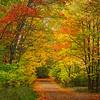 Backroad Fall Foliage - Algonquin Provincial Park, Nipissing, South Part, Ontario, Canada