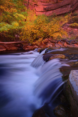Fall Colors Along The Virgin River - Zion National Park, Utah
