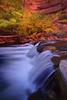 Fall Colors Along The Virgin River - Zion National Park, Utah