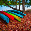 Autumn Foliage Immersed In The Canoes - Algonquin Provincial Park, Nipissing, South Part, Ontario, Canada