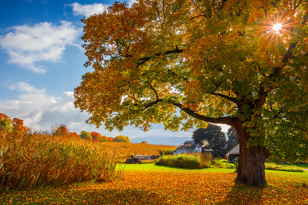 An Autumn Morning At The Farm - Vermont