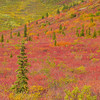 Contrasting Colors In The Valley - Denali National Park, Alaska