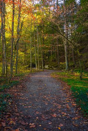 Last Light Skimming Across The Trail - - Robert Treman Park, Finger Lakes Region, Upstate NY, NY