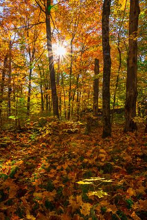 Sun Shines Through The Fall Foliage - Algonquin Provincial Park, Nipissing, South Part, Ontario, Canada
