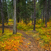 The Pathway Into Color - Lake Wenatchee State Park, Leavenworth, WA