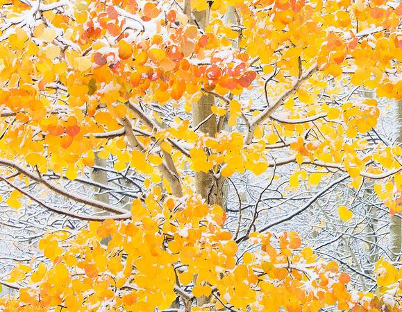 When Two Seasons Meet - Ouray, Colorado