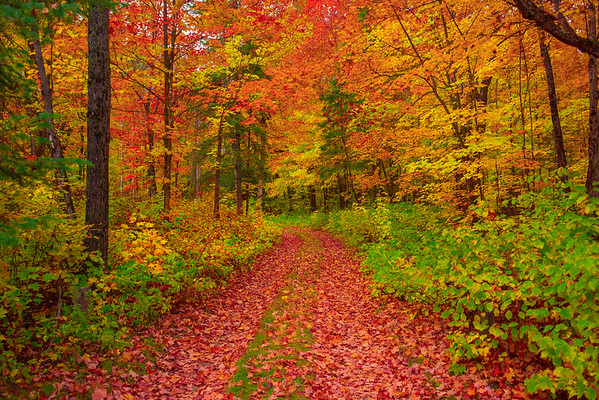 Follow The Path Of Color - Algonquin Provincial Park, Nipissing, South Part, Ontario, Canada