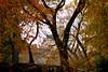 treesbldg3