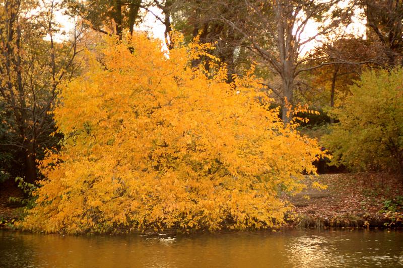 yellowtree4