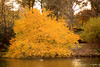 yellowtree4