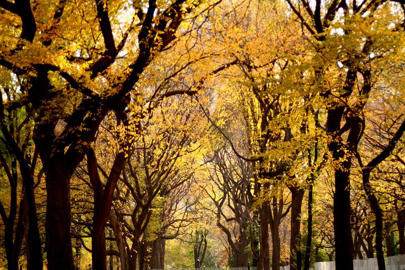 yellowtrees