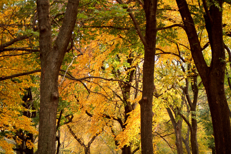 yellowgreen trees