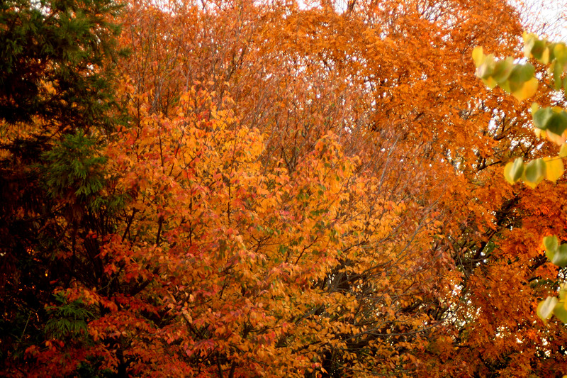 fall foliage7 (mixed)