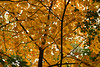 CP-Fall North Woods4464