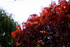 fall foliage3(mixed)