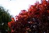 fall foliage3(mixed)