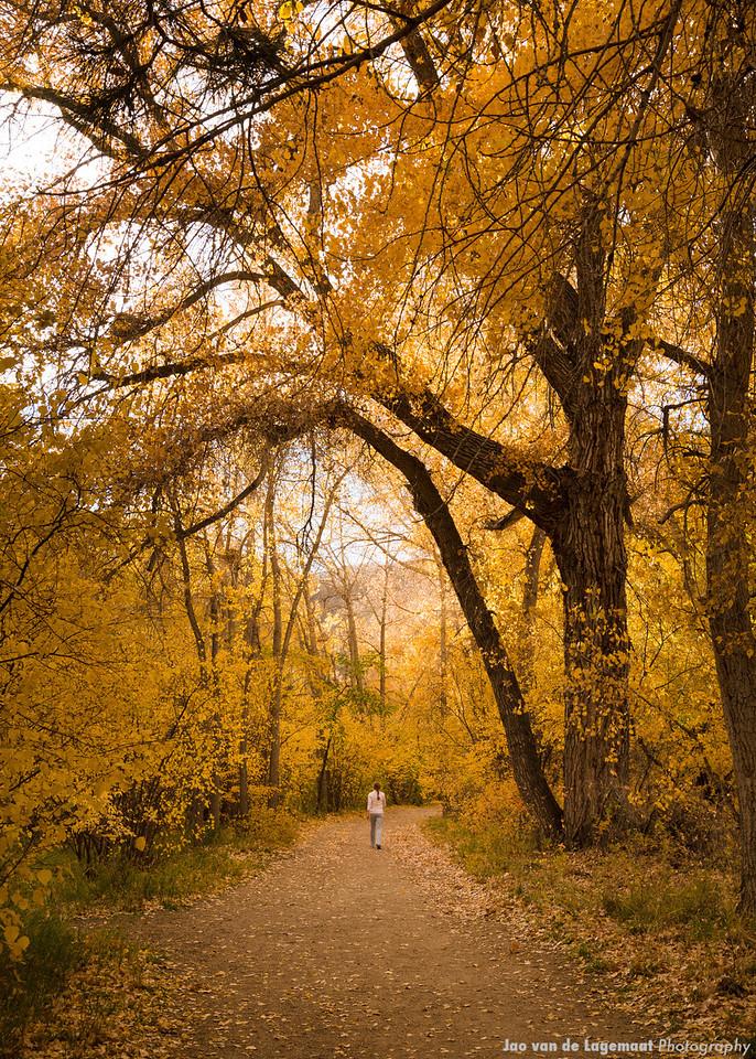 A Golden Path