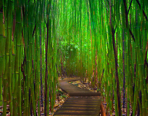 An Opening Of Light - Maui, Hawaii