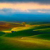 Lone Tree From Alternate Spot - The Palouse, Steptoe Butte State Park,  Eastern Washington