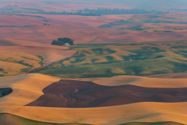 A Golden Morning On The Palouse - Steptoe Butte State Park, Palouse, Eastern Washington