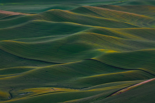 Rolling Palouse Dunes At First Light - The Palouse Region, Washington