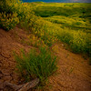 Mud Cracks Point The Way - Badlands National Park, South Dakota