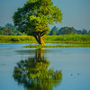 Solo Tree Out In The Middle Of Lake Kaziranga National Park, Assam, North-Eastern India